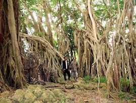Banyan trees, Tuwi, West Savu